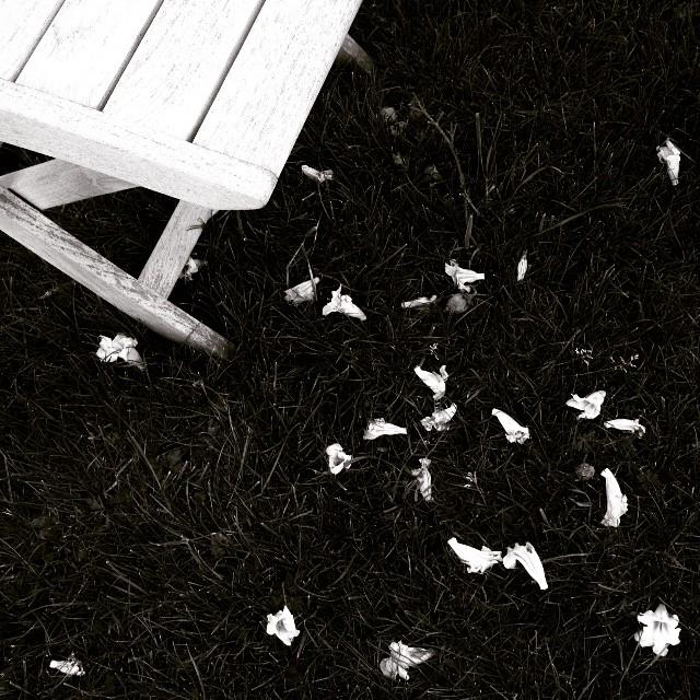 Mettre en scène | Comment photographier les fleurs de printemps ? © Clément Racineux / Tonton Photo