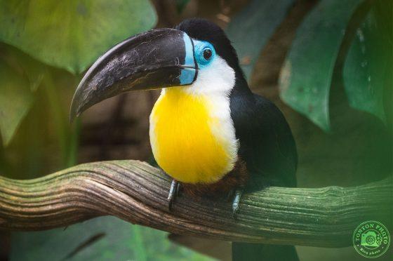 5 conseils et astuces pour photographier au zoo © Tonton Photo