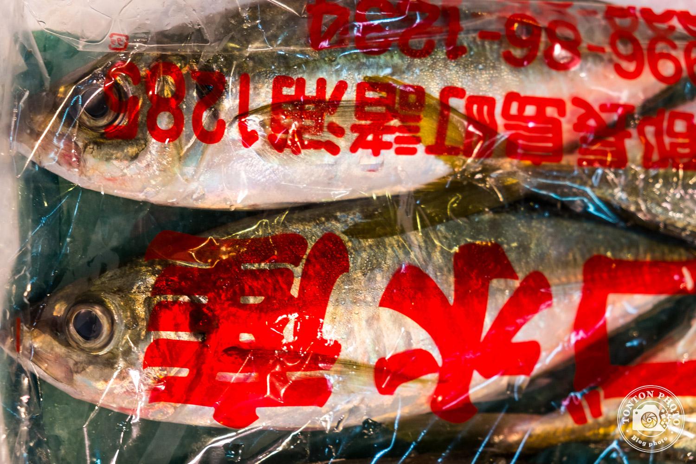 Poissons sur le marché aux poissons et fruits de mer de Tsukiji, Tokyo, Japon © Clément Racineux / Tonton Photo