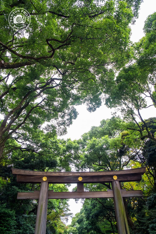 Grand torii à l'entrée du sanctuaire Meiji (shintoïste), quartier d'Harajuku, Tokyo, Japon © Clément Racineux / Tonton Photo