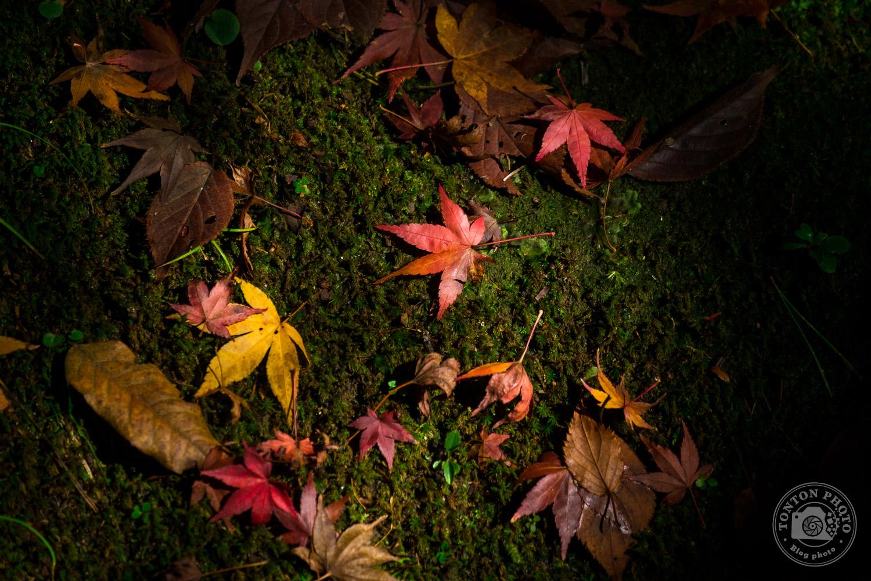Feuilles mortes volontairement sous-exposées, temple Eikando, Kyoto, Japon © Clément Racineux / Tonton Photo
