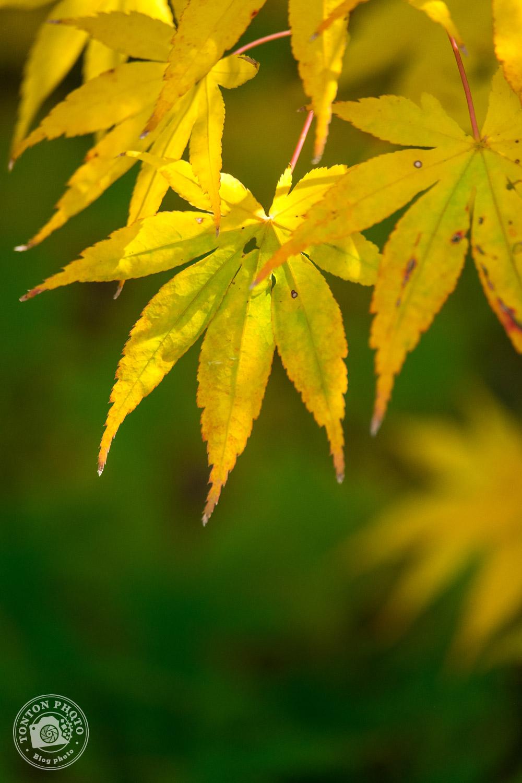 Magnificentes couleurs d'automne, temple Eikando, Kyoto, Japon © Clément Racineux / Tonton Photo