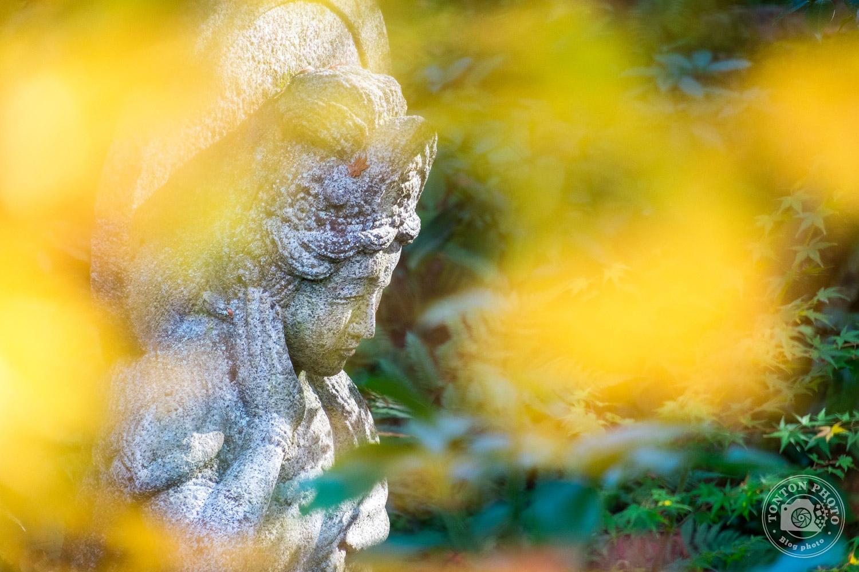 Statue bouddhique enveloppée de nature, temple Eikando, Kyoto, Japon © Clément Racineux / Tonton Photo