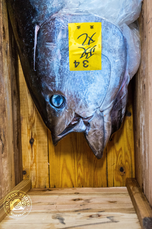 Tête de thon sur le marché aux poissons et fruits de mer de Tsukiji, Tokyo, Japon © Clément Racineux / Tonton Photo