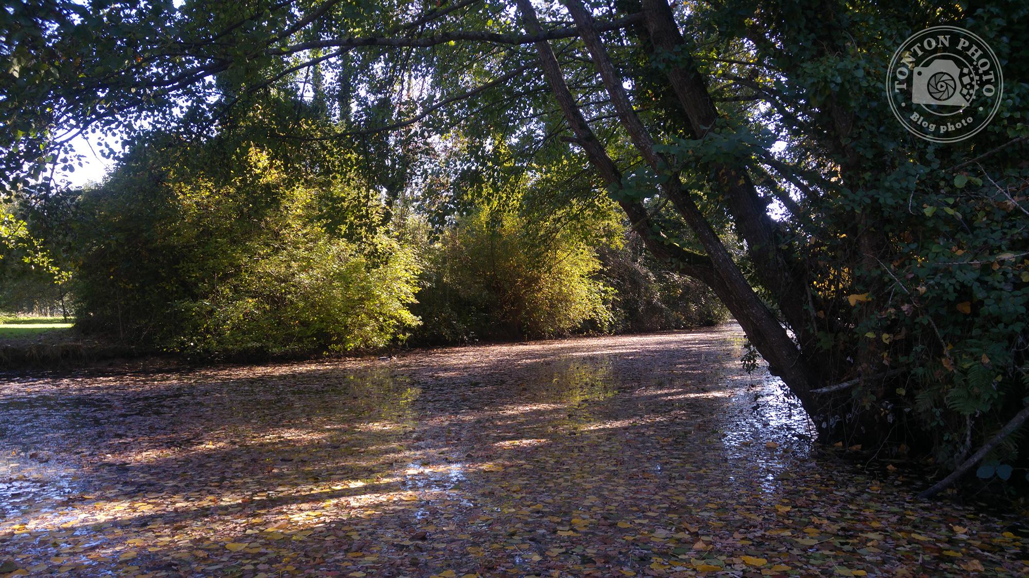 Test du photophone LG G4 : Feuilles mortes sur un petit cours d'eau près de Rennes (Bretagne, France). F/1.8 - 1/125 - ISO 50 © Clément Racineux / Tonton Photo