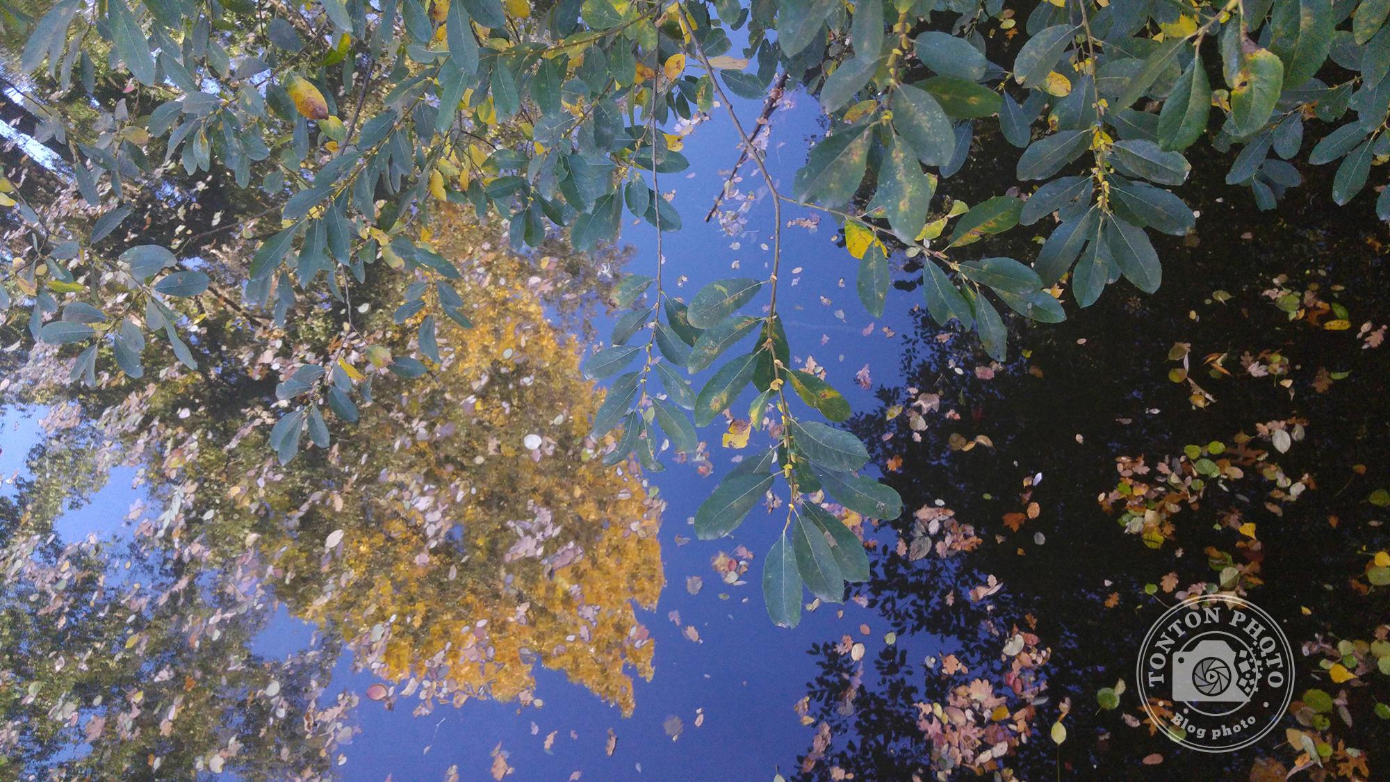 Test du photophone LG G4 : Branchages, feuilles mortes et reflets d'automne sur la rivière. F/1.8 - 1/250 - ISO 400 © Clément Racineux / Tonton Photo