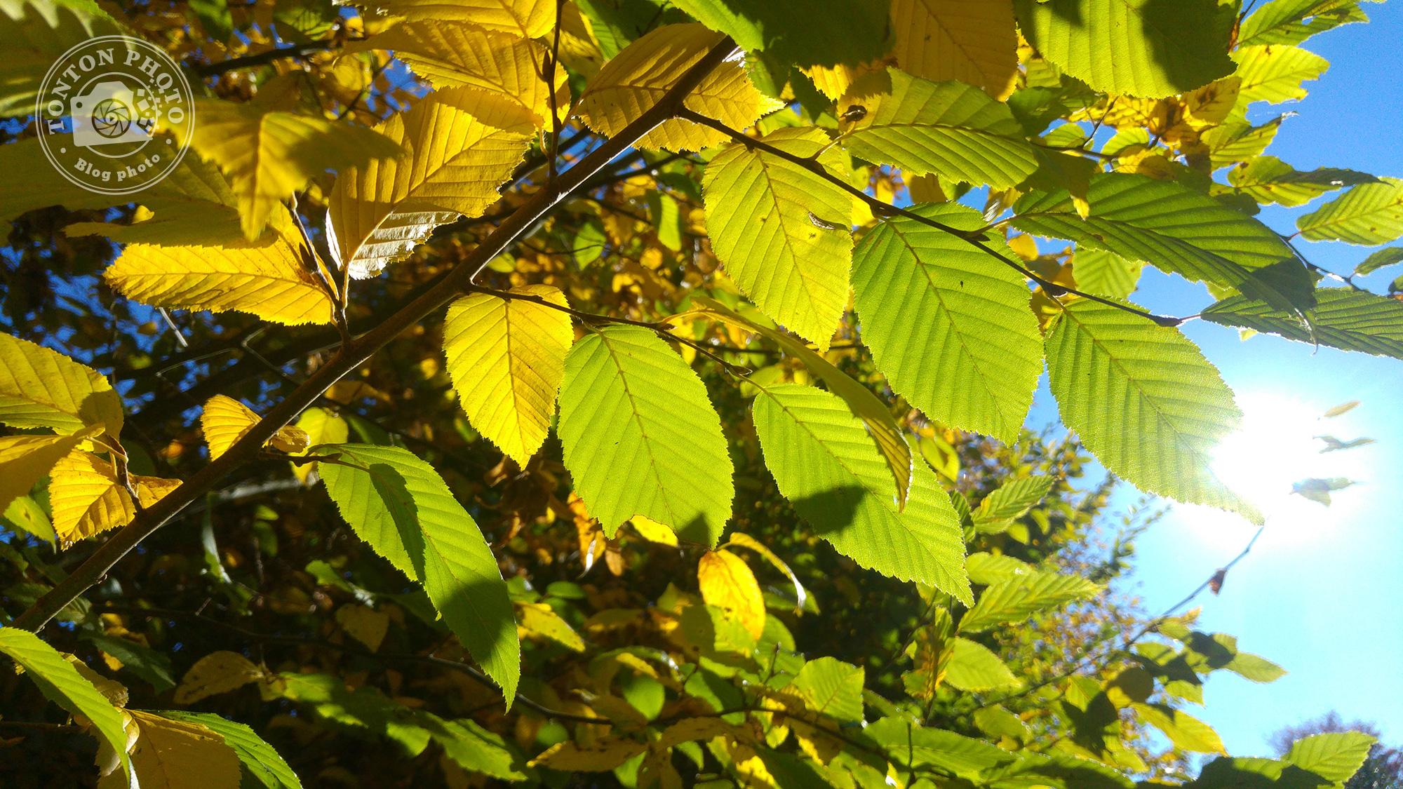 Test du photophone LG G4 : Le soleil de fin de journée rétro-éclaire les feuilles d'automne. F/1.8 - 1/2000 - ISO 100 © Clément Racineux / Tonton Photo