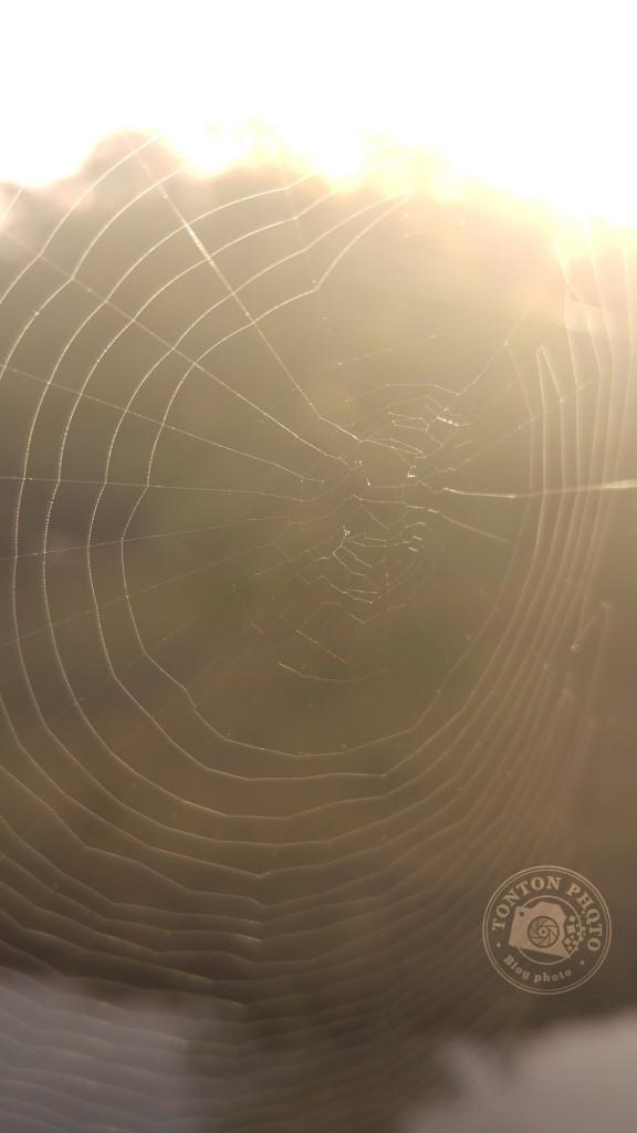 Test du photophone LG G4 : Toile d'araignée dans la lumière du matin. Le LG G4 permet de faire la mise-au-point à une distance très courte, ce qui permet de pratiquer la proxy-photo. F/1.8 - 1/250 - ISO 50 © Clément Racineux / Tonton Photo