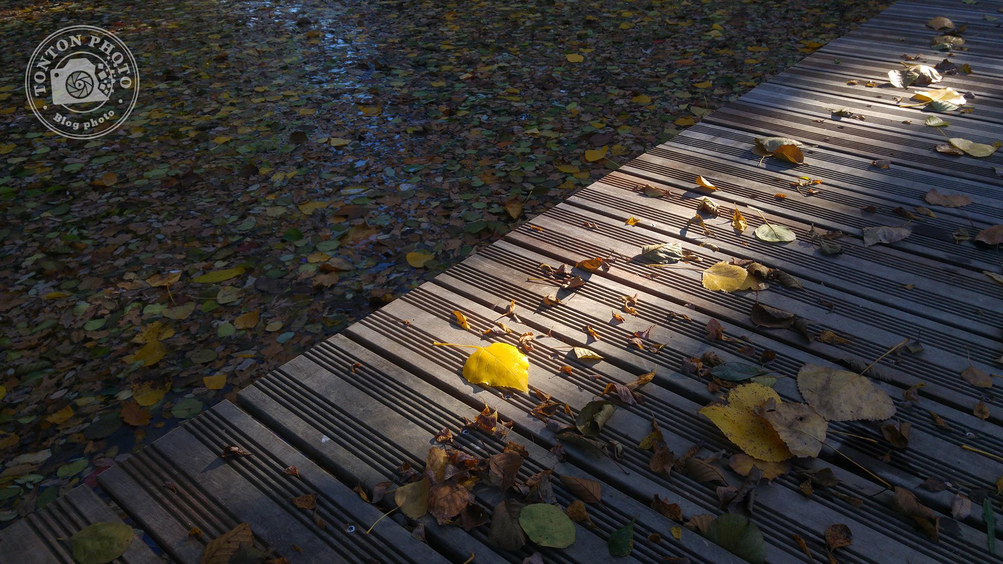 Test du photophone LG G4 : Ponton sur une petite rivière près de Rennes (Bretagne, France). F/1.8 - 1/250 - ISO 50 © Clément Racineux / Tonton Photo