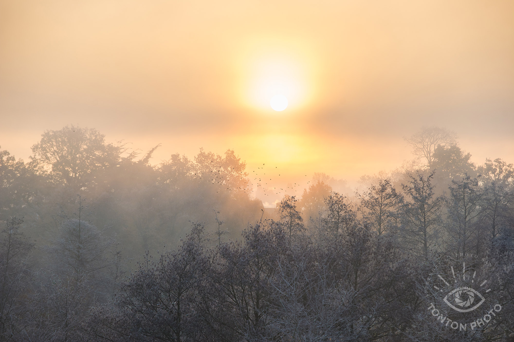 Un merveilleux lever de soleil, mélange de givre et de brouillard. | Comment photographier pendant Noël et les fêtes de fin d'année ? © Clément Racineux / Tonton Photo