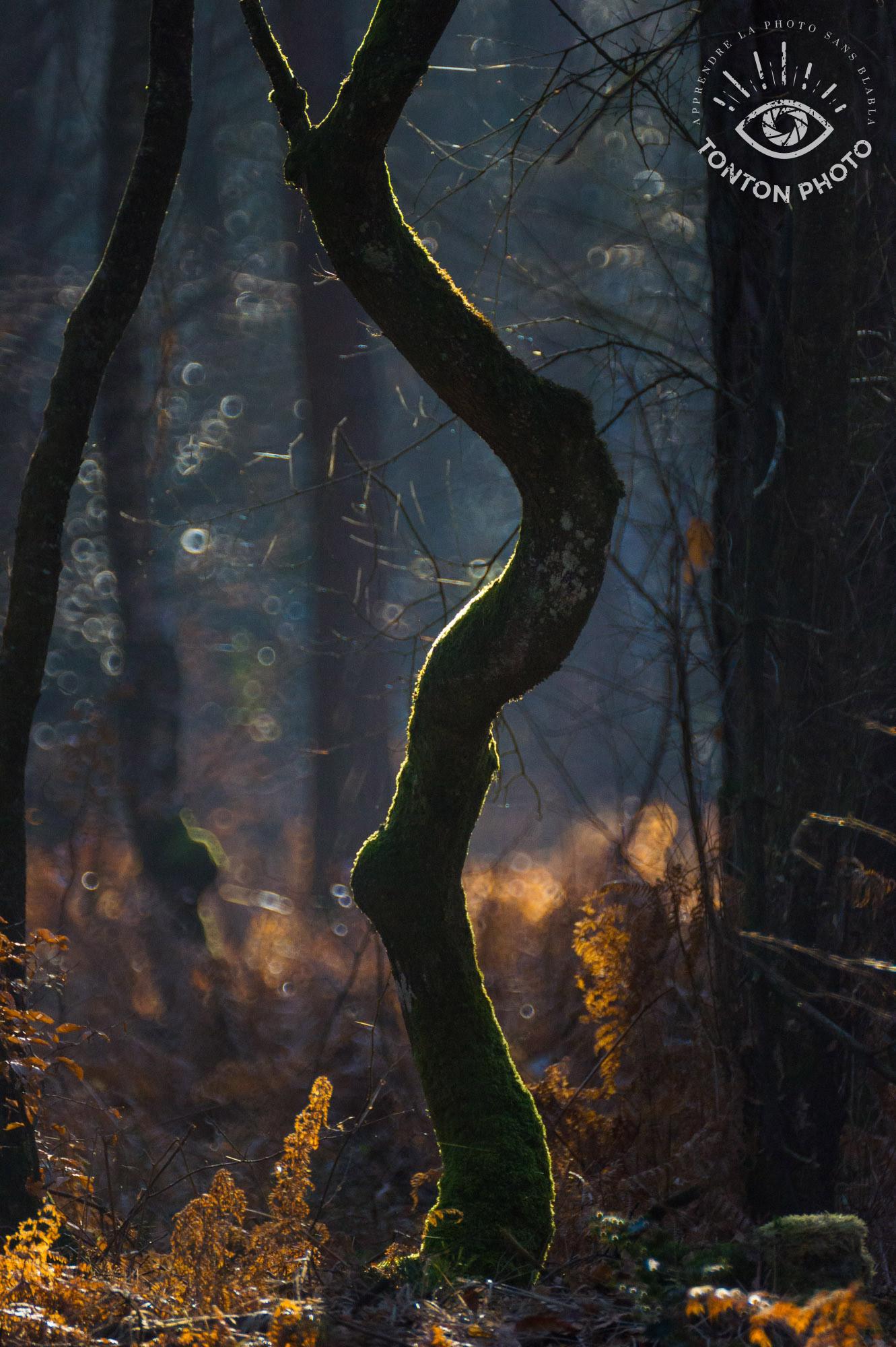 Lumière d'automne. Photo prise avec le télé-objectif Samyang 500mm f/6.3 MC IF © Tonton Photo