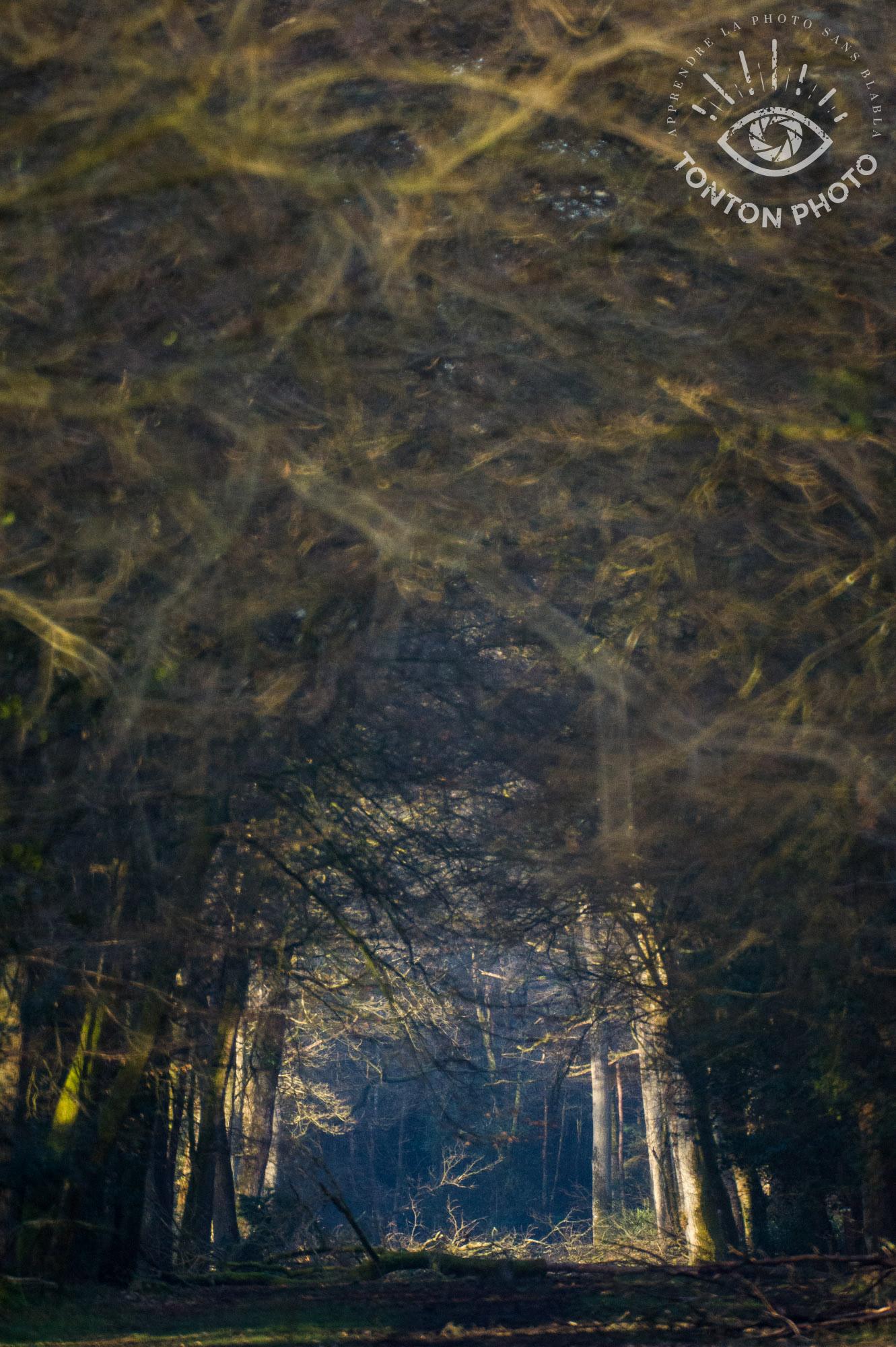 Lumière matinale en forêt, prise avec le télé-objectif Samyang 500mm f/6.3 MC IF © Tonton Photo