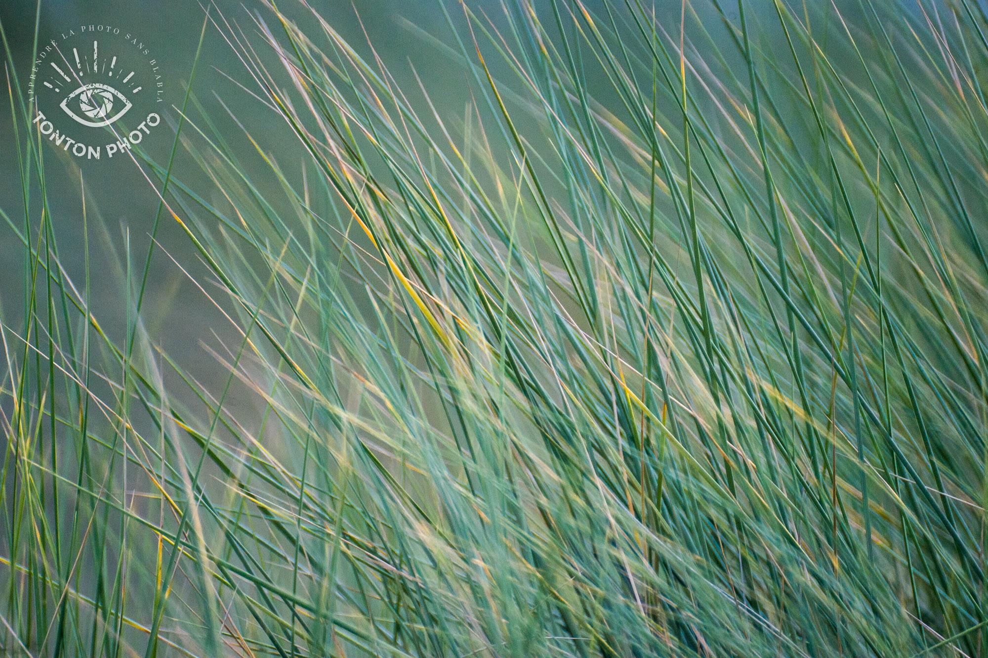 Herbes folles sur la plage photographiées avec le télé-objectif Samyang 500mm f/6.3 MC IF © Tonton Photo