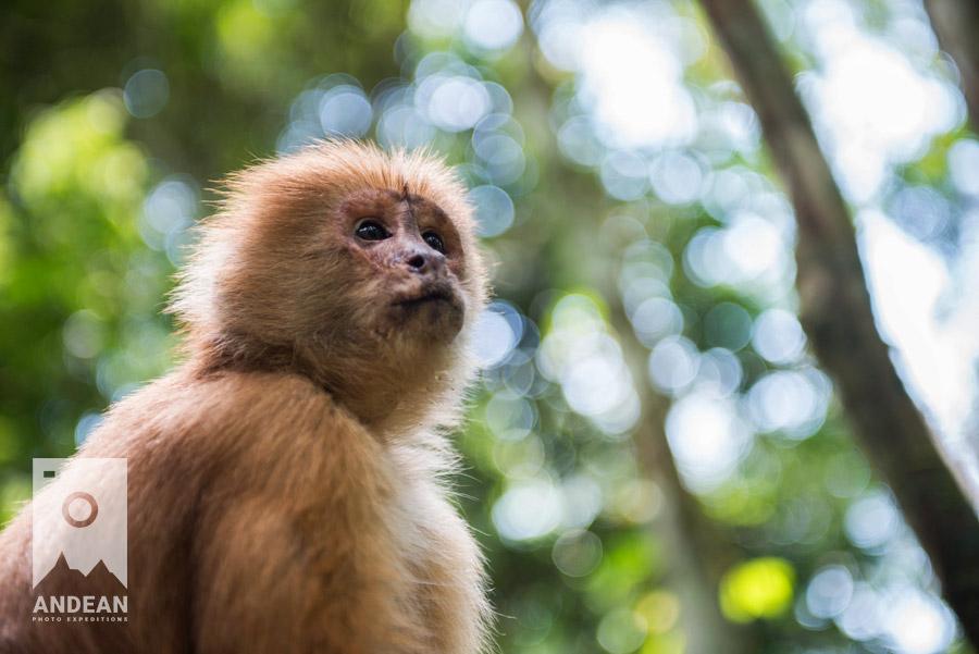 Singe dans la forêt amazonienne, Pérou © Dan Soby / Andean Photo Expeditions - Voyage-photo avec les lecteurs de Tonton Photo : partons ensemble au Pérou !