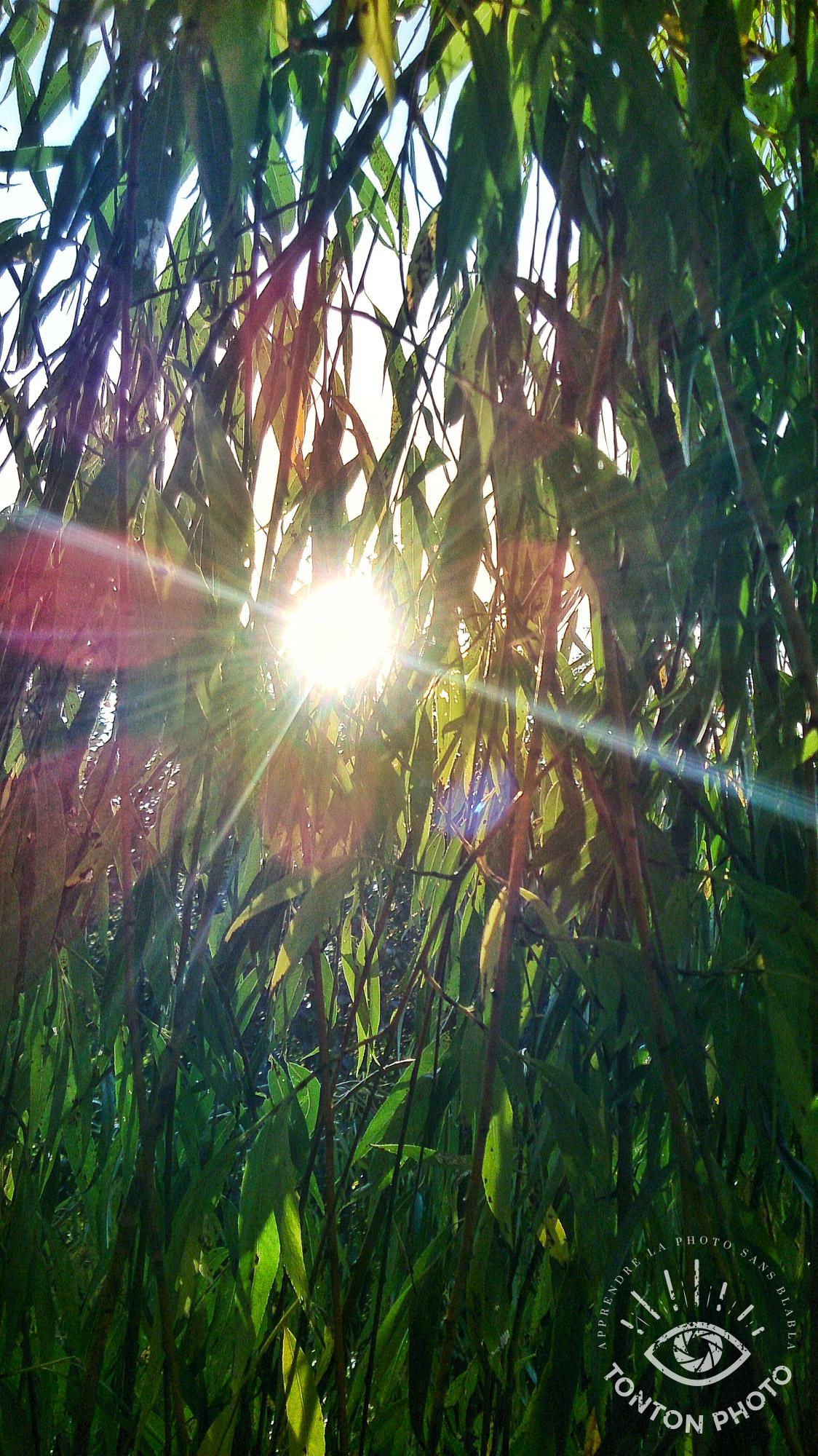 Soleil  caché derrière les branches d'un saule pleureur. Photo prise avec mon smartphone, sur lequel l'ouverture est fixe. Cela n'empêche pas de s'amuser avec les rayons du soleil pour donner du style et du dynamisme à nos images ! © Tonton Photo