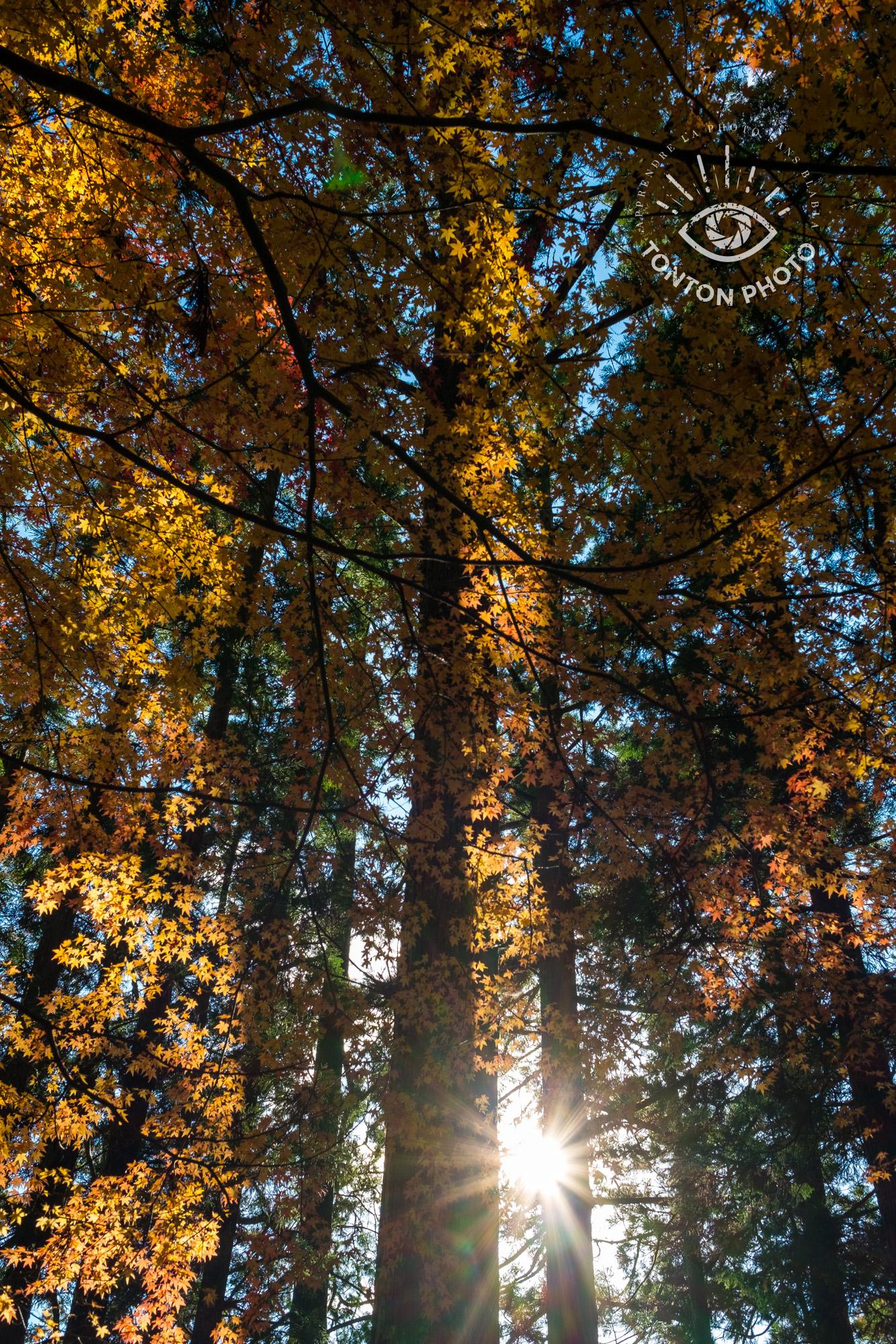 En cachant partiellement le soleil derrière les branchages, j'ai pu capturer les rayons du soleil et jouer sur les jeux d'ombre et de lumière. Forêt d'Okuno-in, Koyasan, Japon © Tonton Photo
