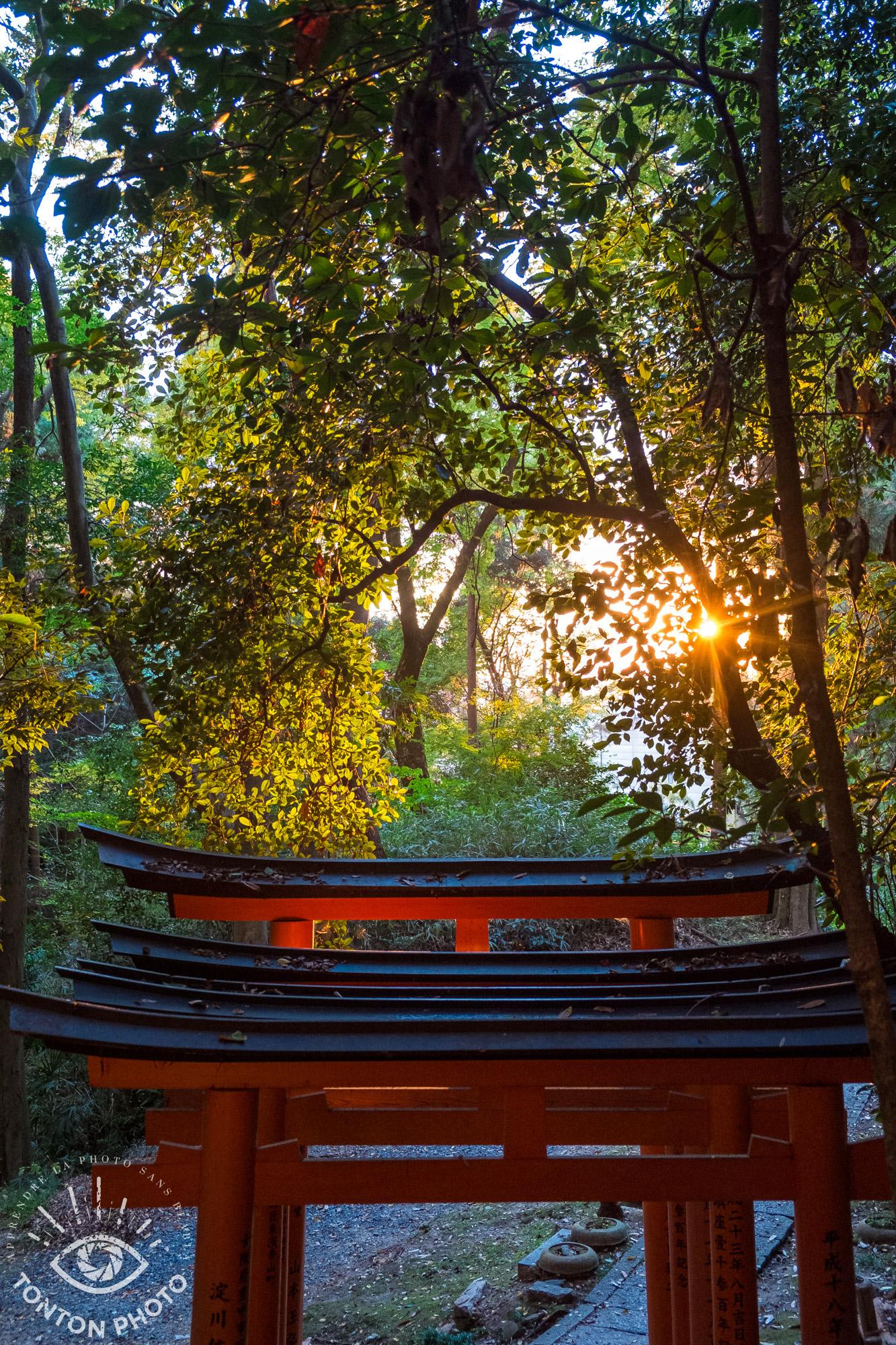 Les rayons du soleil percent la végétation. Il faut bouger l'appareil photo jusqu'à trouver la position idéale pour capturer les rayons dans l'objectif. © Tonton Photo