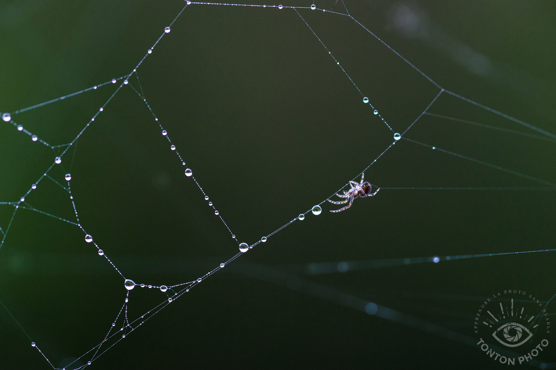 Minuscule araignée sur sa toile, cachée dans un coin des barreaux de mon balcon, en ville © Tonton Photo