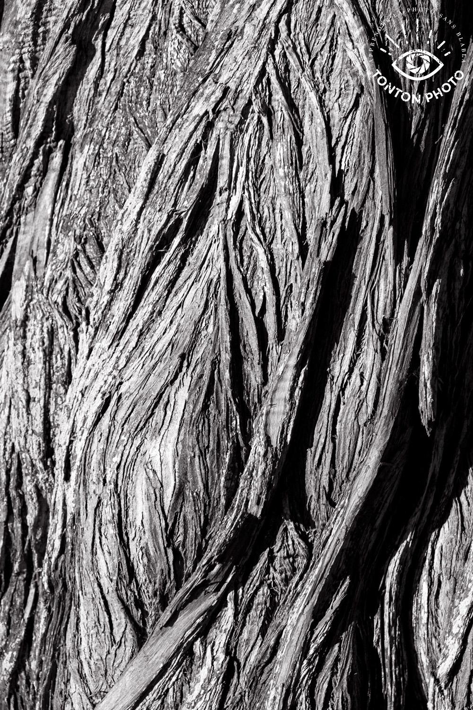 Après avoir observé l'arbre et tourné autour de lui pendant quelques minutes, j'ai trouvé que cette partie du tronc était très belle : les lignes de l'écorce forment de très beaux reliefs graphiques, comme des canyons... © Tonton Photo