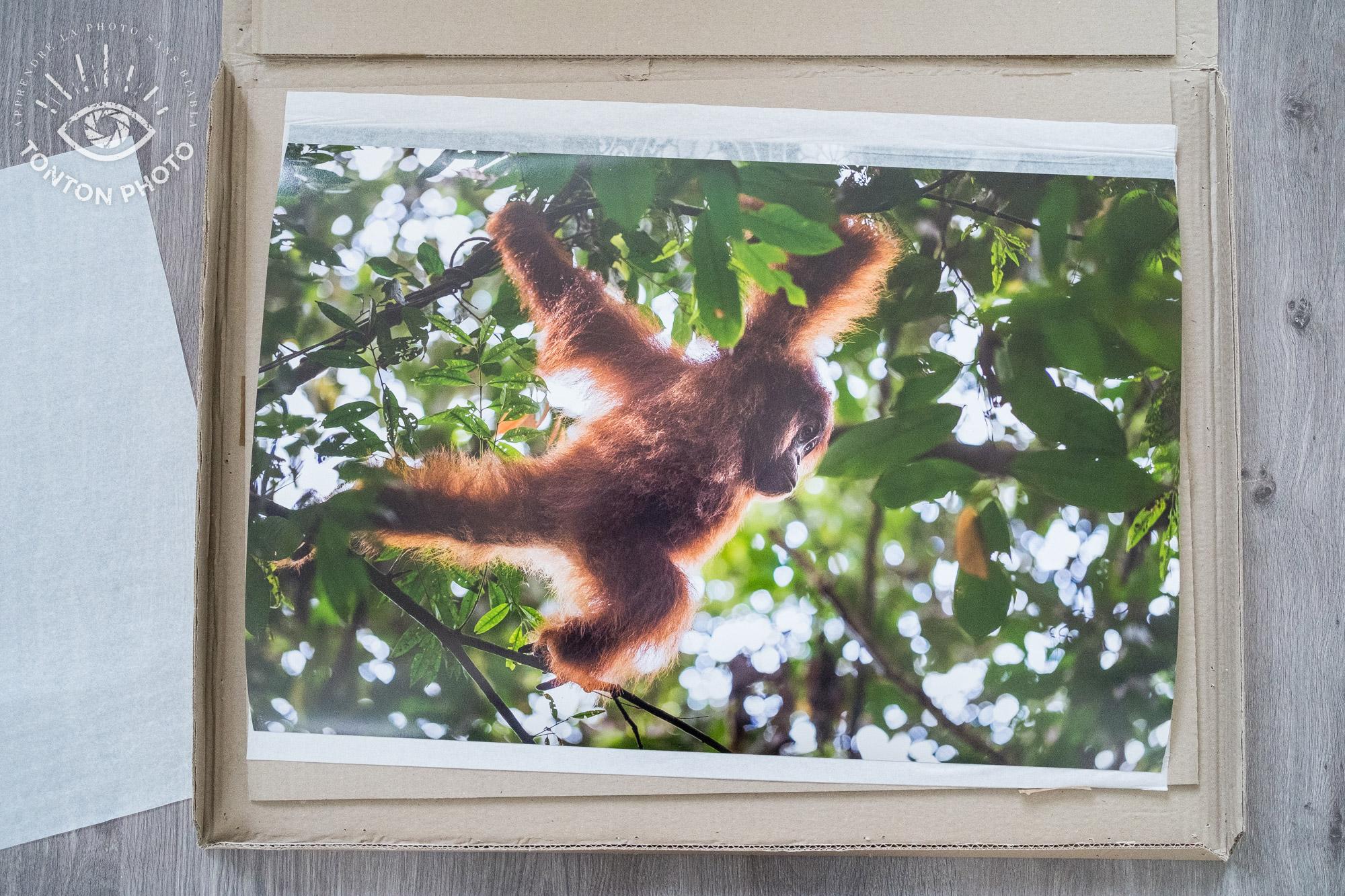Test labophotos.fr : tirage d'art d'une photo animalière sur papier Canson Infinity Baryta Prestige 340g © Tonton Photo