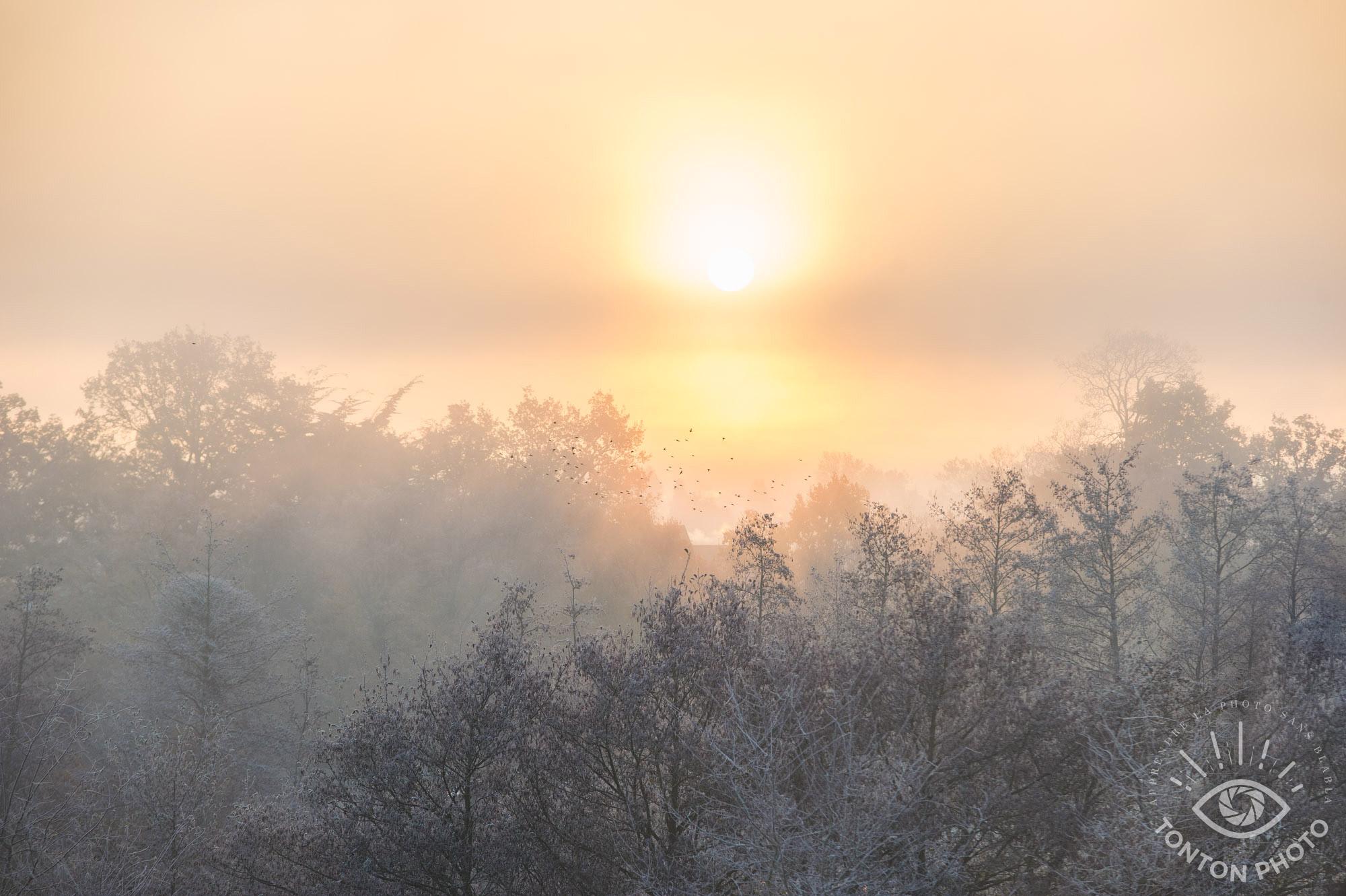 Comment photographier le brouillard ? Lever de soleil © Clément Racineux / Tonton Photo