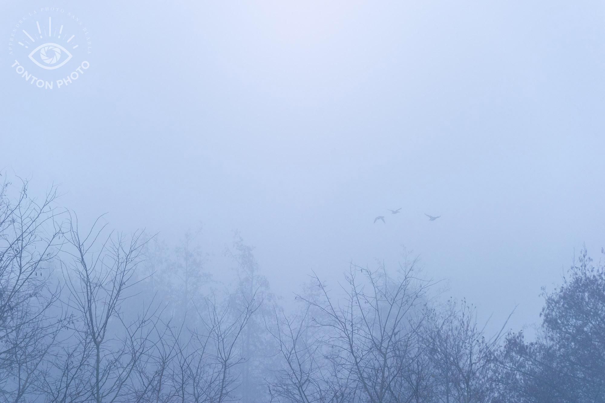 Comment photographier le brouillard ? Vol de canards sauvages © Clément Racineux / Tonton Photo