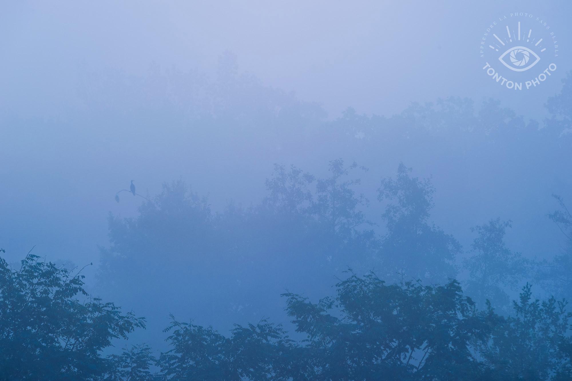 Comment photographier le brouillard ? Silhouette de cormoran © Clément Racineux / Tonton Photo