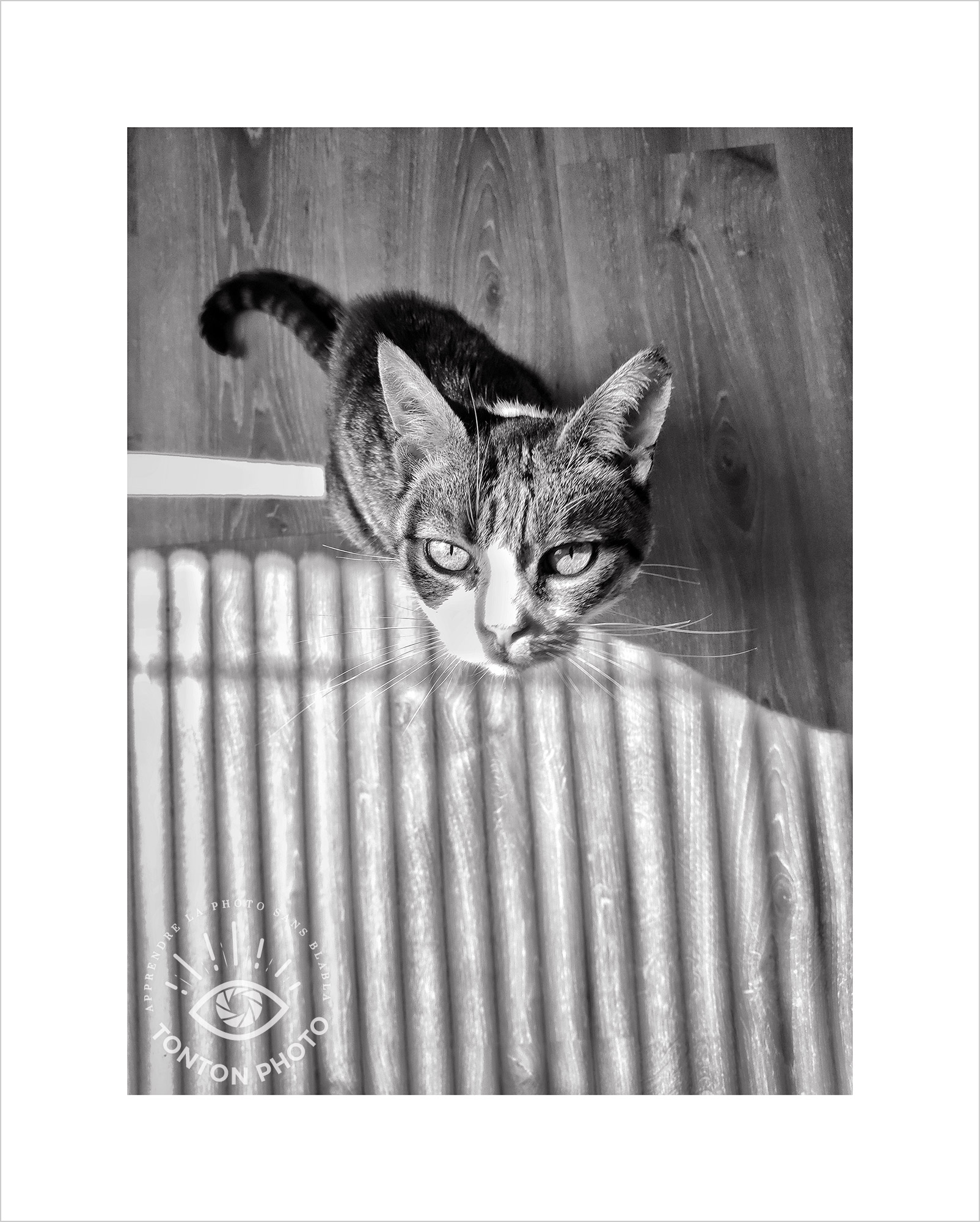 Jeu d'ombre et de lumière projeté sur le chat à travers les stores du bureau. Photo prise au smartphone Xiaomi Mi Mix 3 © Tonton Photo