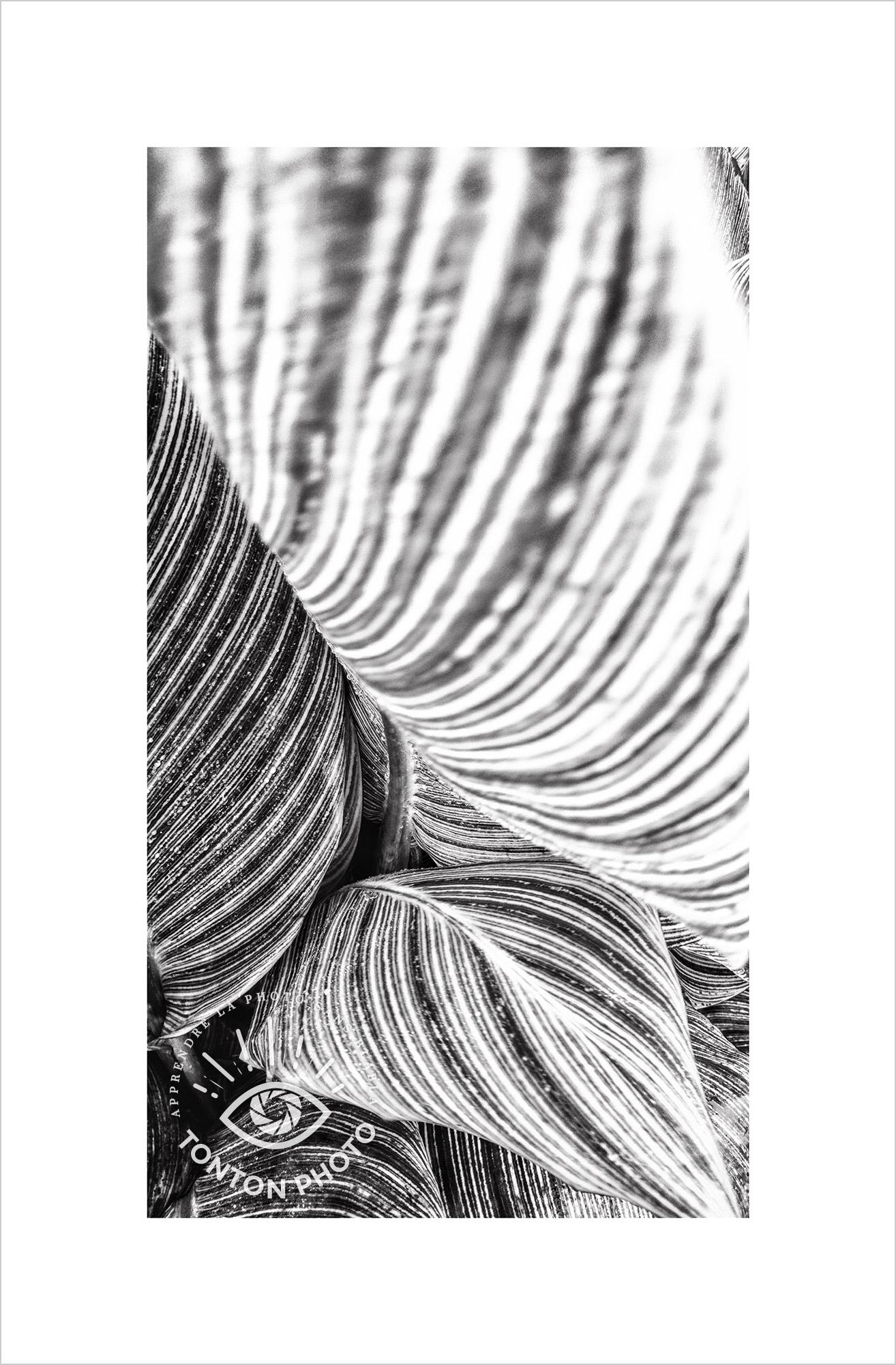 Jeu d'ombre et de lumière à travers les feuilles larges d'une jolie plante verte sur un parterre communal. Photo prise au smartphone LG G4 © Tonton Photo
