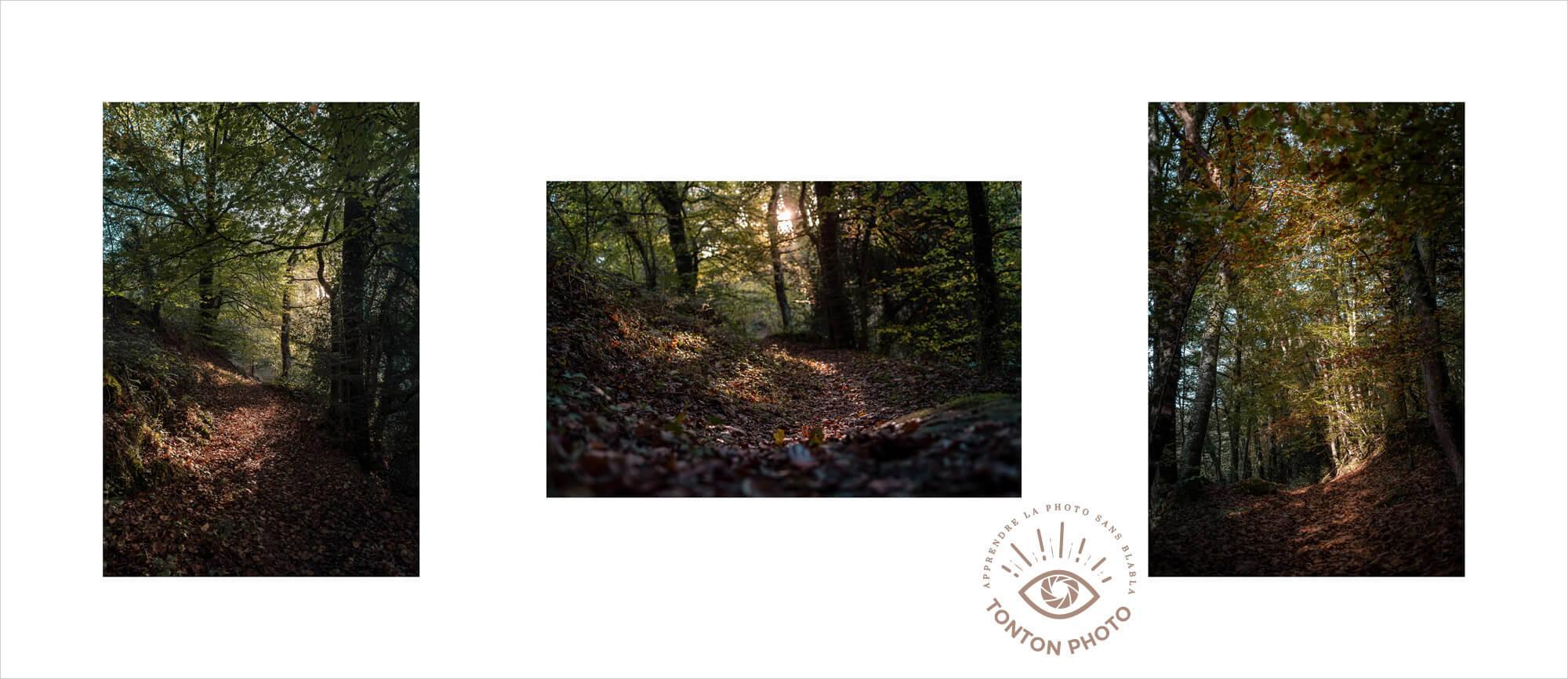 Cliquez ici pour voir ma mini-série « Lumière de sous-bois » sur Instagram #monconfinementphoto © Clément Racineux / Tonton Photo
