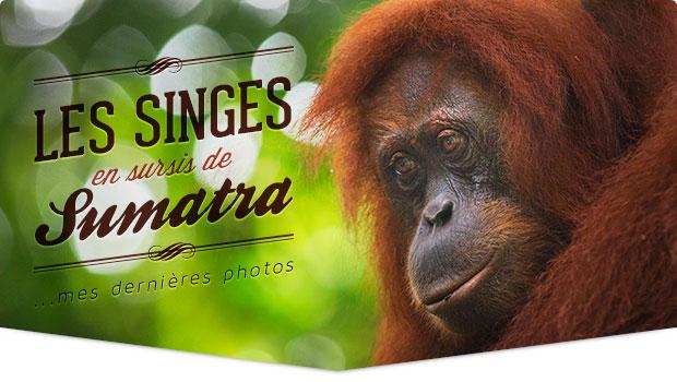 Tonton Photo : les singes en sursis de Sumatra, Indonésie
