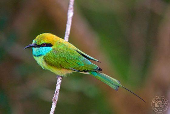 Tuto : comment photographier les oiseaux ? 5 conseils de Tonton Photo