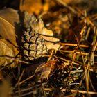 Tutoriel et inspiration : 8 conseils pour photographier l'automne et ses couleurs © Tonton Photo