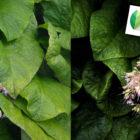 Tuto : comment utiliser Snapseed pour post-traiter facilement sur smartphone © Tonton Photo